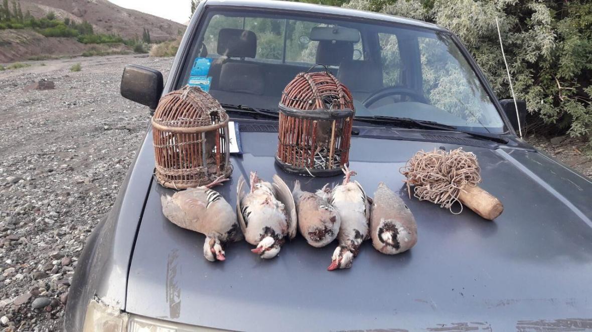 خبرنگاران تعدادی پرنده شکاری در تربت حیدریه کشف شد