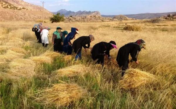 افزایش 44 درصدی مدیران زن در وزارت جهاد کشاورزی